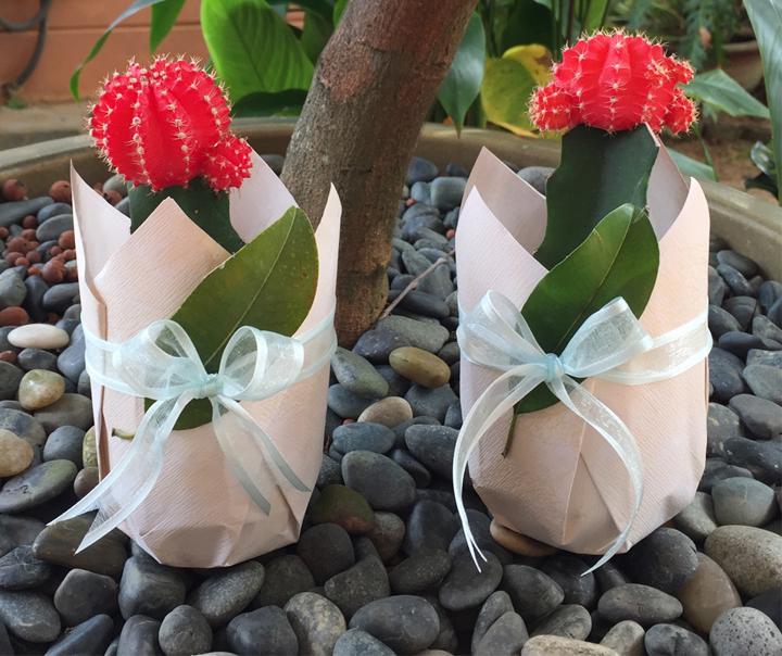 Tặng cây bonsai sinh nhật bạn nữ