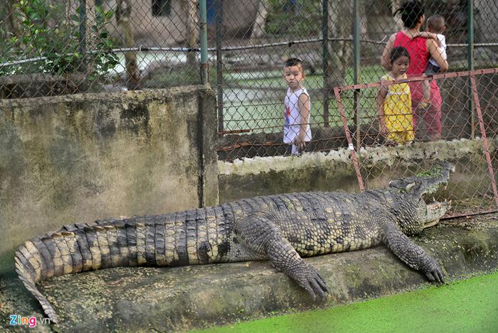 Bên trong trại nuôi cá sấu hoa cà quận 12