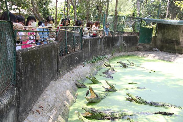 Câu cá sấu tại Làng Cá Sấu Sài Gòn