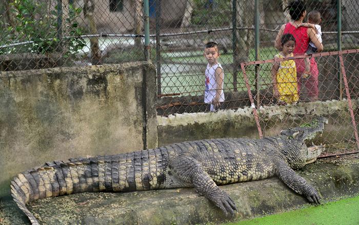 Bên trong trại Cá sấu Hoa Cà