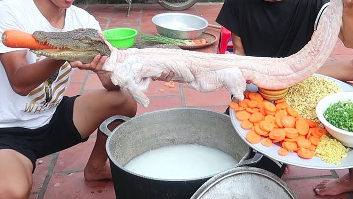cháo cá sấu