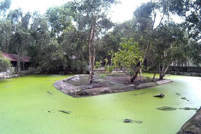 Khu nuôi cá sấu
