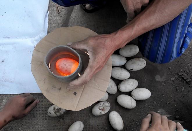 Soi trứng kiểm tra phôi trước khi ấp