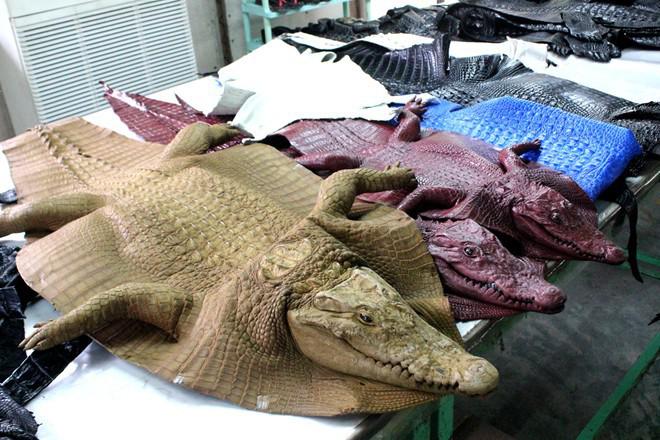 Tấm da thuộc từ cá sấu