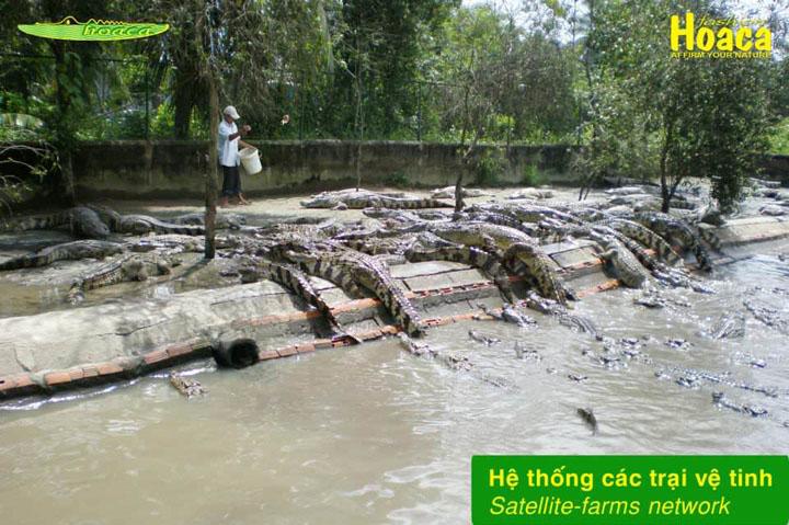 Hệ thống trại nuôi cá sấu thuộc Làng Cá Sấu Sài Gòn, quận 12