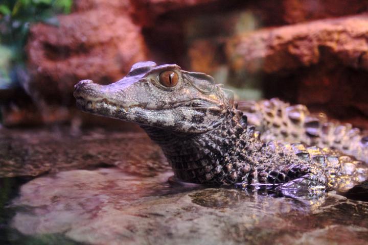 thông tin thú vị về cá sấu