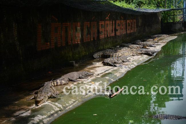 Trại Làng Cá Sấu Sài Gòn