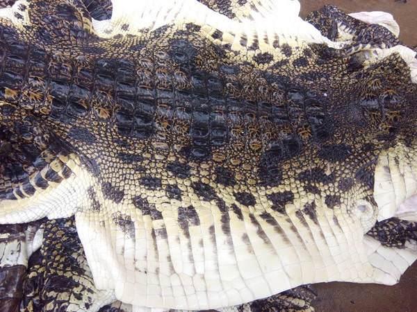 Cách thuộc da cá sấu