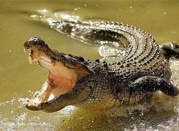 Cá sấu thường sống ở đâu