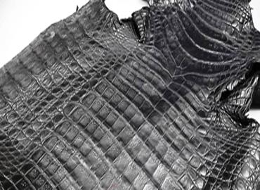 Da bụng cá sấu là gì? nằm ở đâu trên con cá sấu