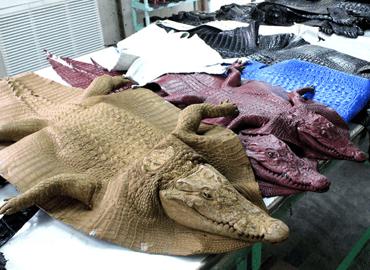 Mô hình Làng Cá Sấu Sài Gòn, Quận 12