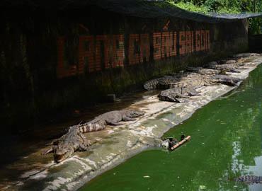 Hiệp Hội Cá Sấu Việt Nam là gì?