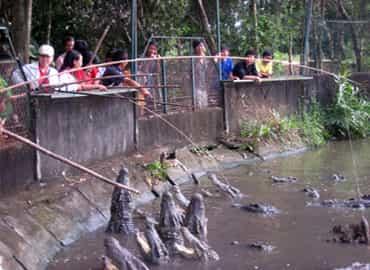 Thú câu cá sấu trại Hoa Cà